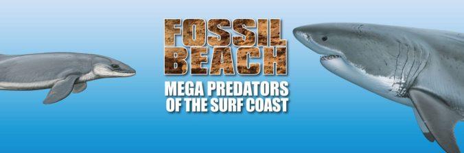 cropped-Fossil-beach-banenr.jpg